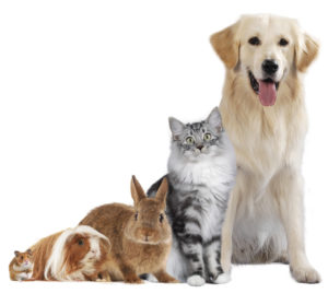 Expat Academy What advice would you give a relocating employee who is moving with a pet?
