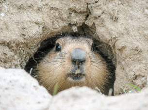 Expat Academy It's Groundhog Day........again.......